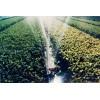 農業覆蓋膜、噴灌水帶、滴灌、噴霧系統、育苗盤、溫室網室器材
